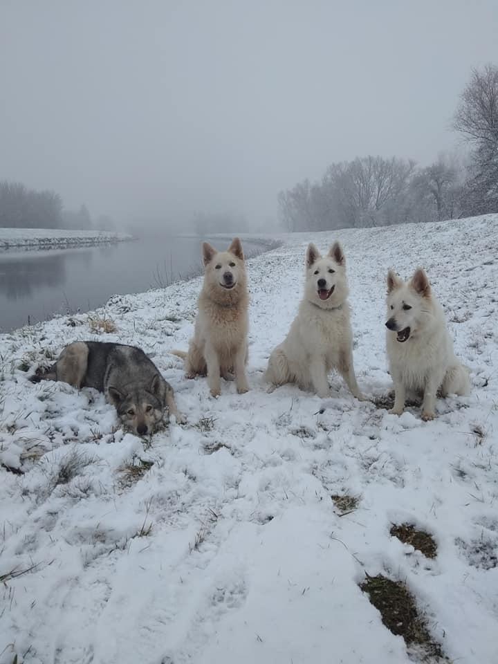 sníh-3