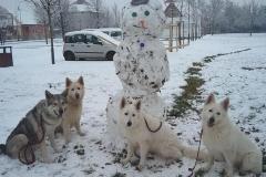 sníh-1